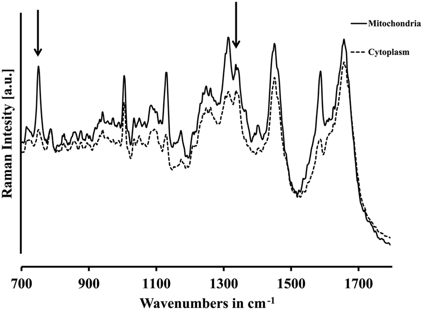 Predominant bands in the Raman spectra of (solid line