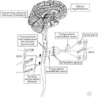 (PDF) Sympathetic skin response: Basic mechanisms and