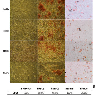 in vivo gene therapy diagram 2000 toyota camry engine pluripotency-related expression by quantitative (q)pcr. gene... | download scientific