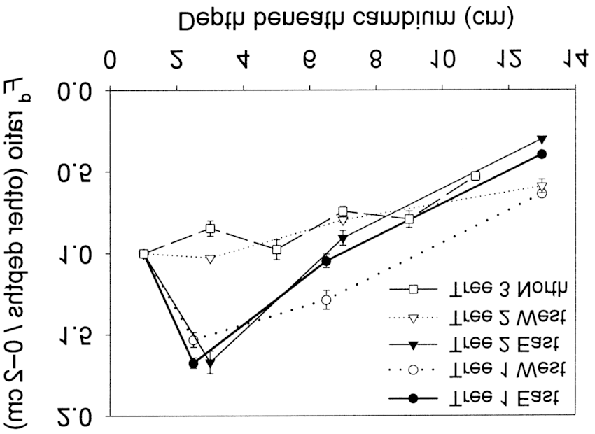 Spatial variations in xylem sap flux density in the trunk