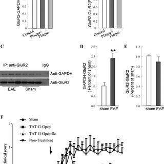 (PDF) Blocking GluR2–GAPDH ameliorates experimental
