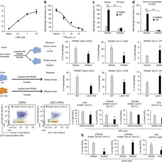 (PDF) LTB4 promotes insulin resistance in obese mice by