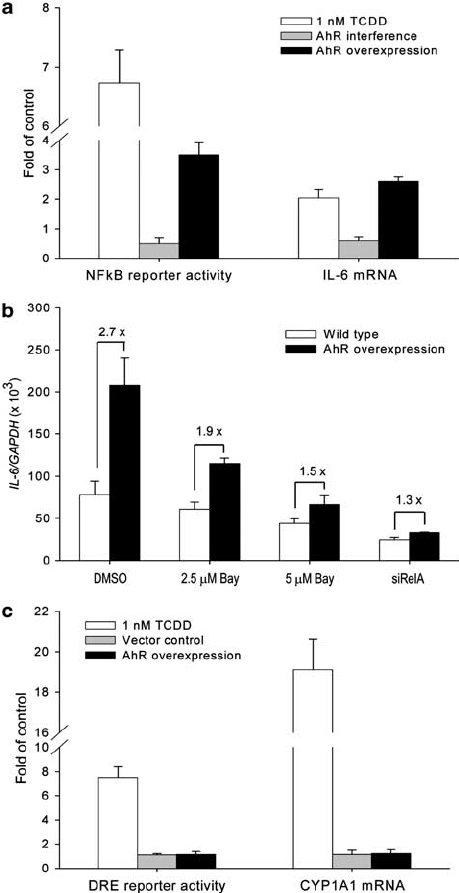 Effects of AhR expression on NF k B and DRE reporter