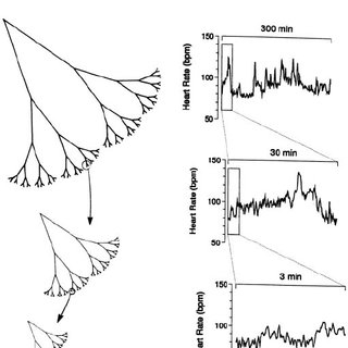 Singularity spectra of heart rate signals in health and