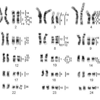 (PDF) Comparative chromosome painting of pronghorn