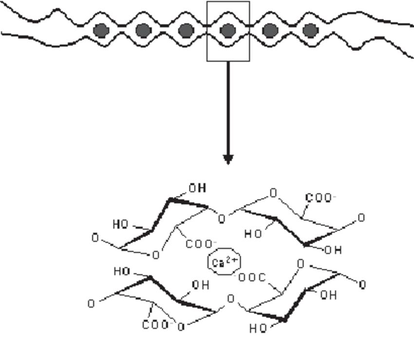 Schematic representation of calcium binding to