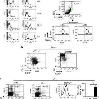 (PDF) Corrigendum: TLR4/MyD88-induced CD11b+Gr-1intF4/80