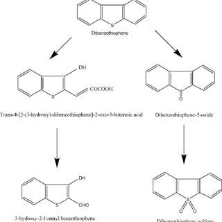 (PDF) Biotechnology of desulfurization of diesel