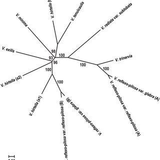 PCA scattered plot depicting relationship among 286