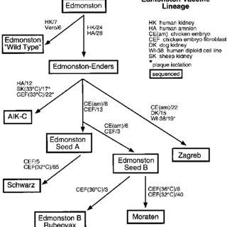 (PDF) Comparison of Predicted Amino Acid Sequences of