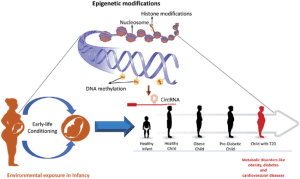 Epigeic mechanisms in the context of the DOHaD theory