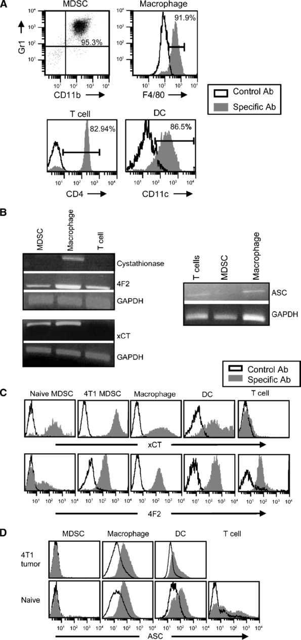 MDSCs express the heterodimeric x c − transporter (xCT