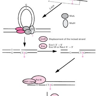 Schematic representation of mismatch (a) and IDL (b