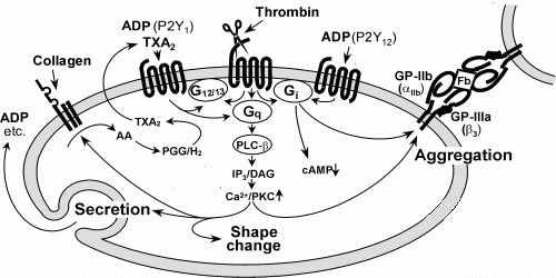 Fig. 3. Schematic representation of intracellular events