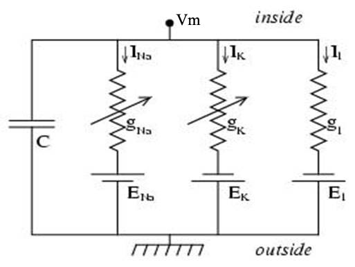Equivalent electrical circuit for the cell's membrane [4
