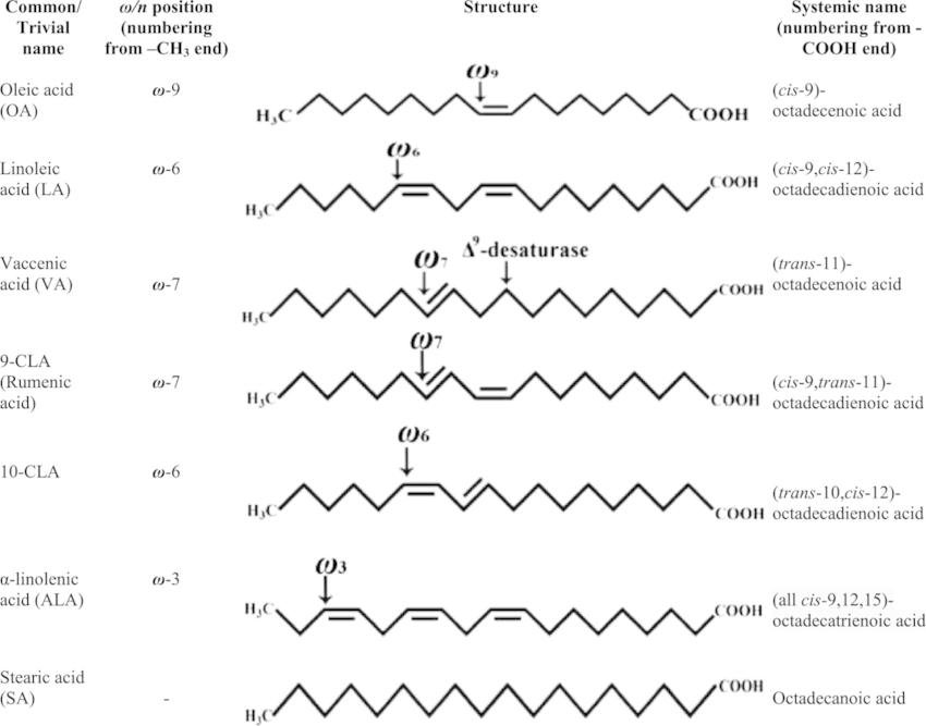essential fatty acid diagram