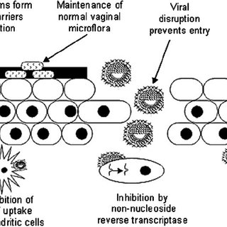 Schematic depicting the various mechanisms of preventing