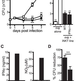 (PDF) iNKT cell production of GM-CSF controls