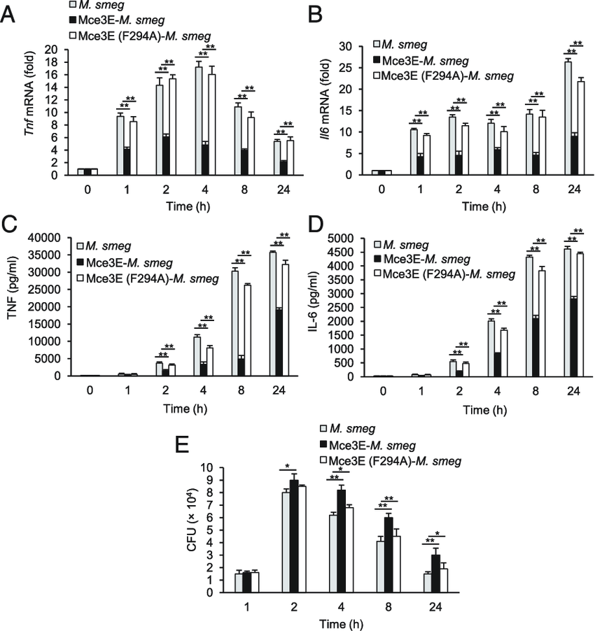 Expression of M. tuberculosis Mce3E, but not Mce3E (F294A