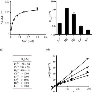 (PDF) Cadmium is a potent inhibitor of PPM phosphatases