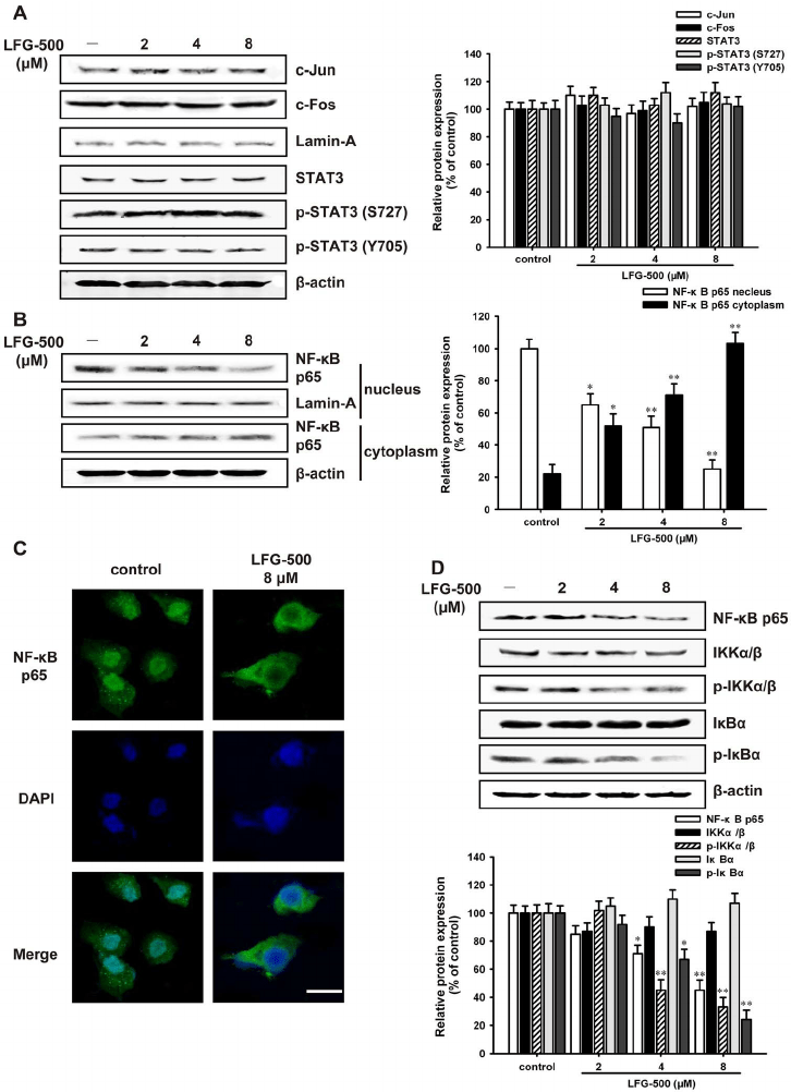 LFG-500 inhibits the nuclear translocation of NF- k B