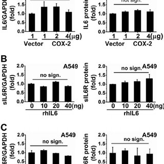 COX-2-regulated sIL6R expression is independent of IL-6