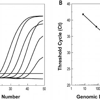 Principle of real-time PCR genotyping using displacing