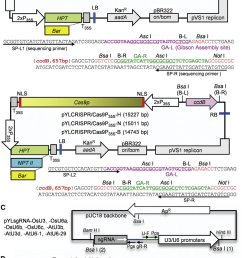 a crispr cas9 system for monocot and dicot plants  [ 850 x 1611 Pixel ]