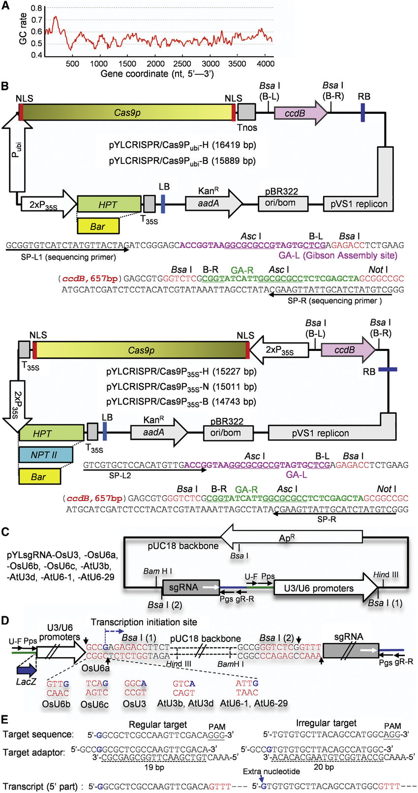 hight resolution of a crispr cas9 system for monocot and dicot plants