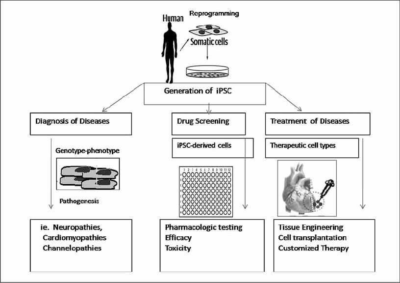 Potential clinical application of induced pluripotent stem