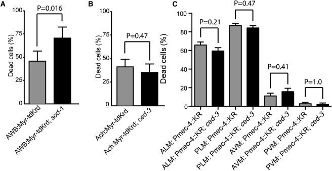 KillerRed Phototoxicity Is Enhanced in SOD Mutants and