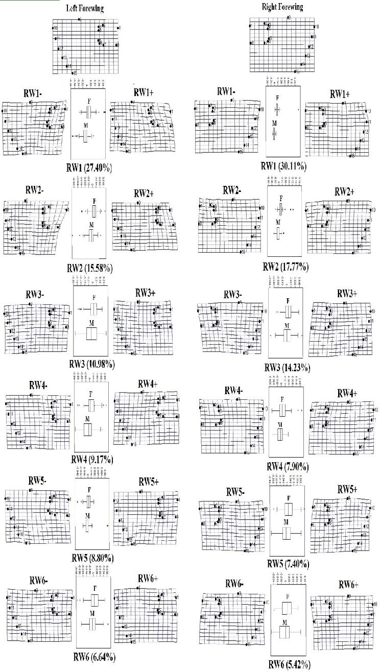 medium resolution of summary of landmark based geometric morphometric analysis showing the download scientific diagram