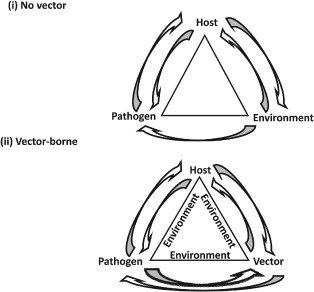 Disease triangles for non vector and vector-borne