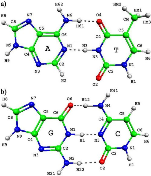 small resolution of complementary base pairs adenine thymine at and guanine cytosine gc