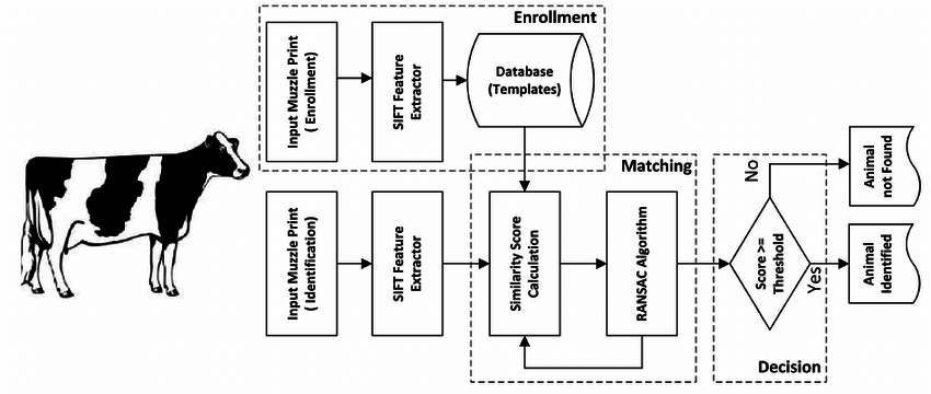 A block diagram of a complete cattle identification system