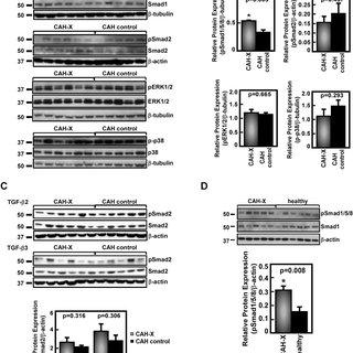 (PDF) Transforming growth factor-β (TGF-β) pathway