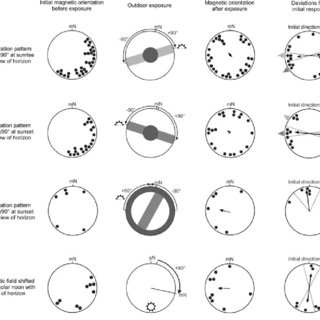 (PDF) Magnetic compass of migratory Savannah sparrows is
