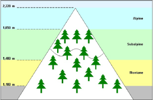 Diagram depicting mountain habitats The alpine region