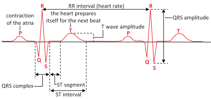 labeled ekg diagram yamaha g8 gas golf cart wiring the description of ecg curve download scientific