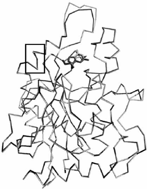 Superposition of Hs PNP apoenzyme (light gray) against the