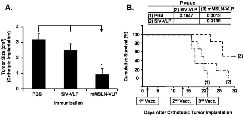 Chimeric mMSLN-VLP vaccination reduced tumor burden and
