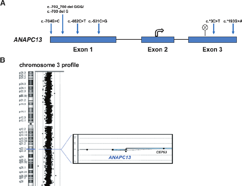 Figure W1. Mutation and deletion screening in ANAPC13 . (A
