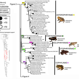 (PDF) Molecular phylogeny of microhylid frogs (Anura