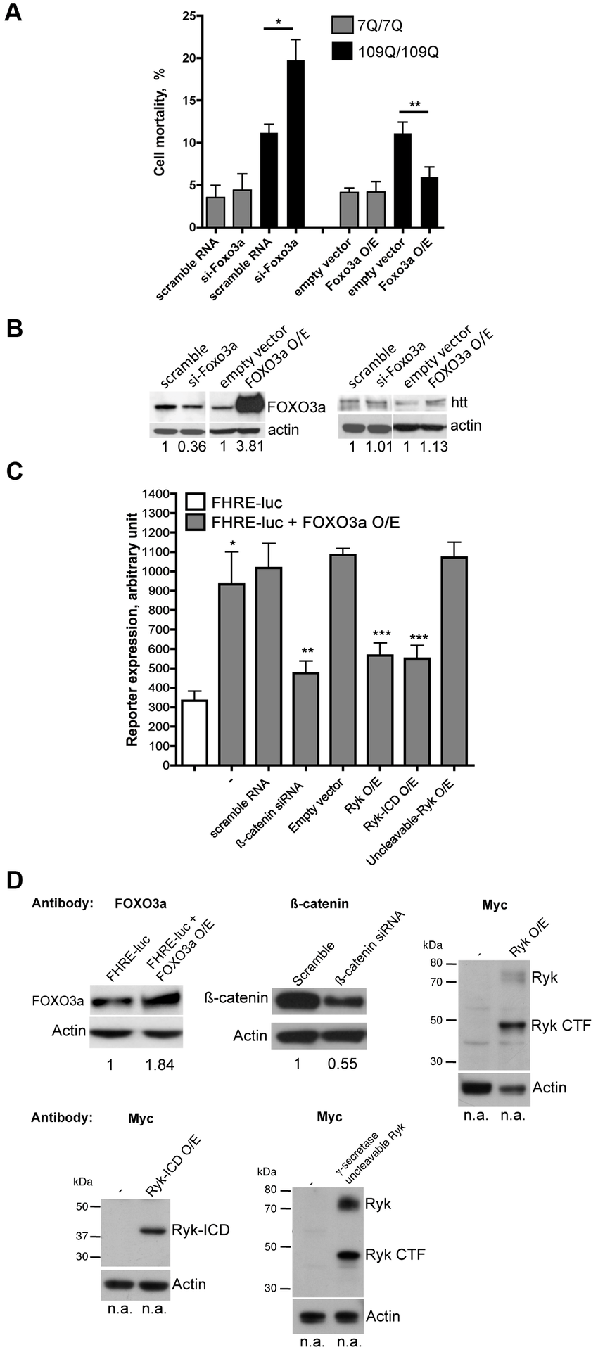 The Ryk ICD represses the transcriptional activity of