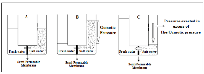 Osmosis (A), osmotic pressure (B) and reverse osmosis (c