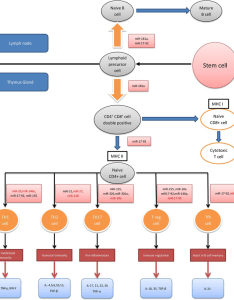 Micrornas mirnas and the adaptive immune system this diagram download scientific also rh researchgate