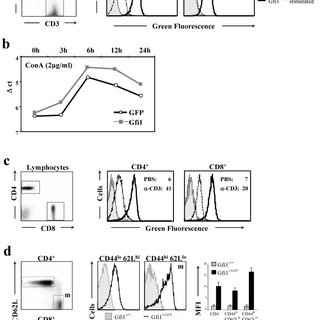 Expression of Gfi1 during early T-cell development. a