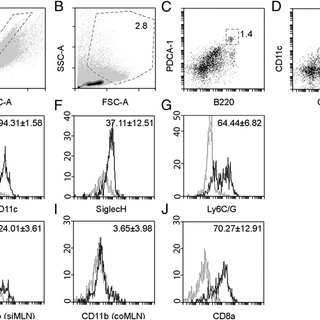 (PDF) Activation of Plasmacytoid Dendritic Cells in Colon