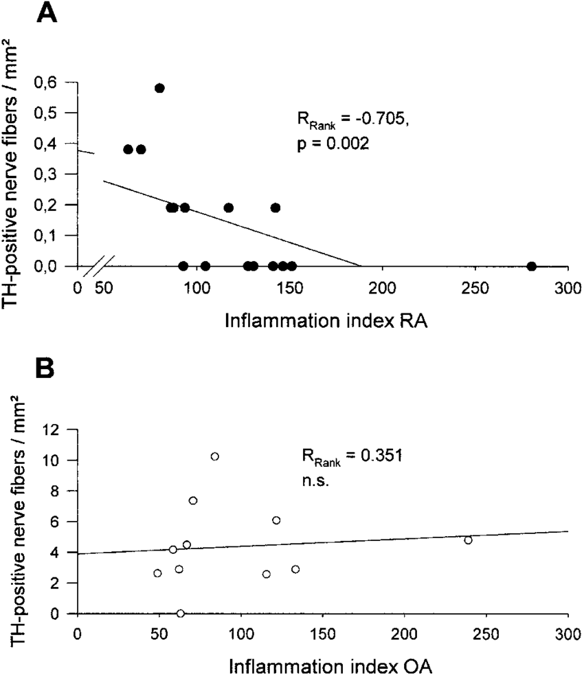 hight resolution of relationship between degree of synovial inflammation and number of tyrosine hydroxylase positive nerve fibers