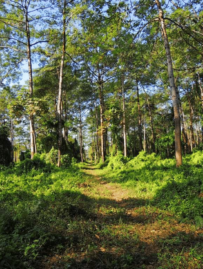 medium resolution of semi evergreen forest patches in d ering wildlife sanctuary